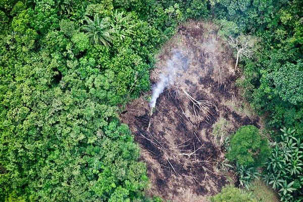 Джунглі Конго