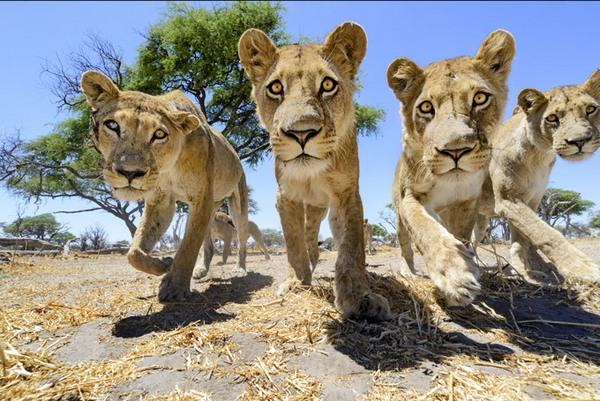 жизнь львов скачать торрент - фото 9