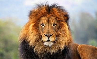 лев скачать торрент - фото 7