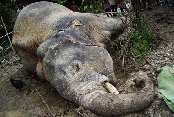 Мертвый слон