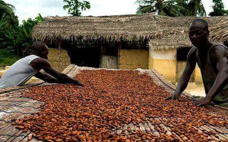 пплантації какао в Гані