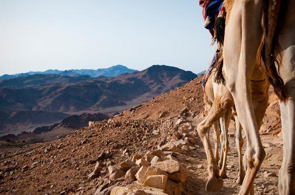 синайська пустеля