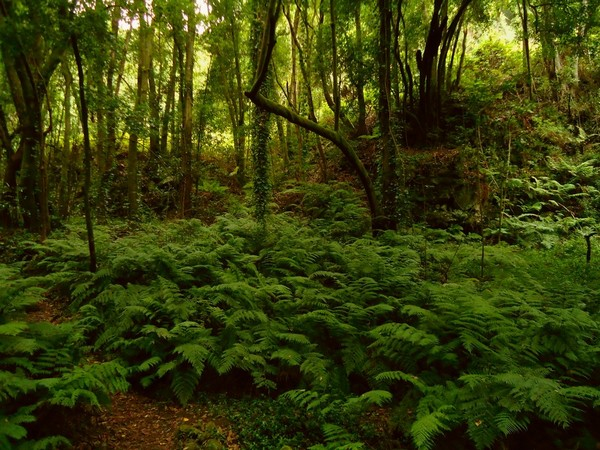 лес в Конго