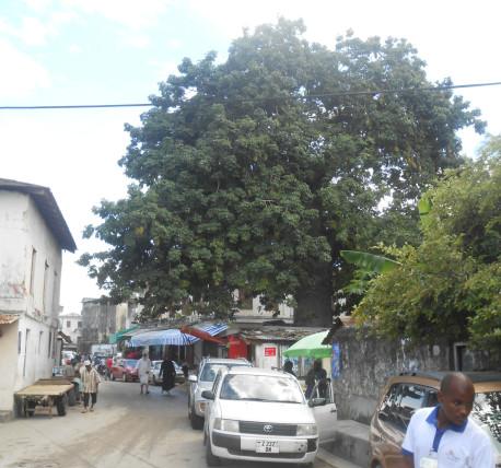 сейба в Киншасе