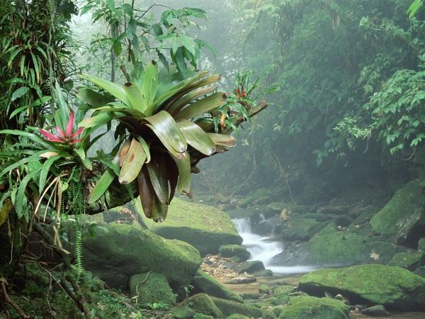 тропический лес в Конго