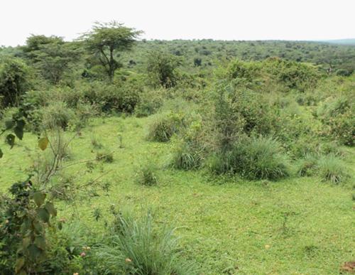 вторичная саванна в Конго