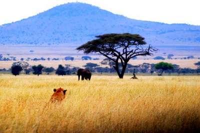 африканська савана