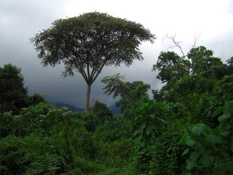 Африканський ліс