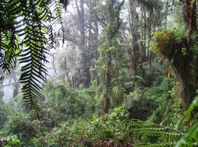 Африканский лес