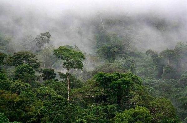 тропический лес Африки